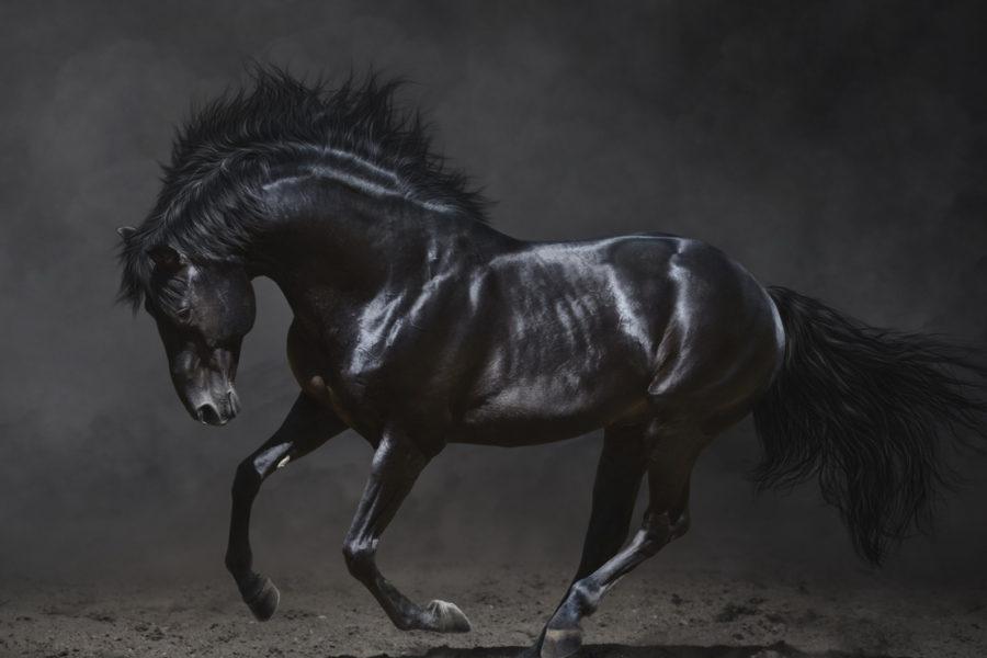 Was ist das Schwarze Pferd?